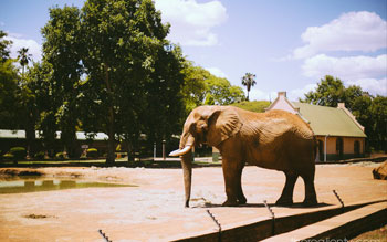 mont-paradiso-guesthouse-pretoria-actvities-places-to-see-in-pretoria-national-zoo