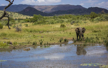 mont-paradiso-guesthouse-pretoria-actvities-places-to-see-in-pretoria-pilanesberg-wildlife