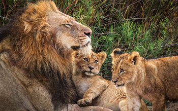 mont-paradiso-guesthouse-pretoria-actvities-places-to-see-in-pretoria-walking-with-the-lions